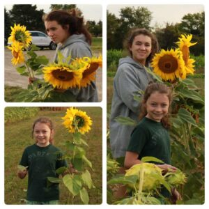 A collage of two girls, one older and one younger. They are holding sunflowers.