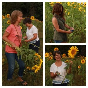 A collage of three women cutting sunflowers